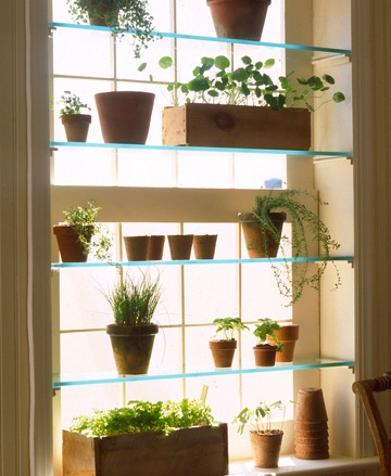Glass shelves in window