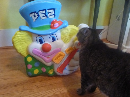 cat with peter Pez display