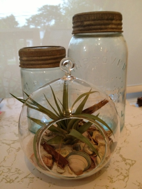 terrarium and jars
